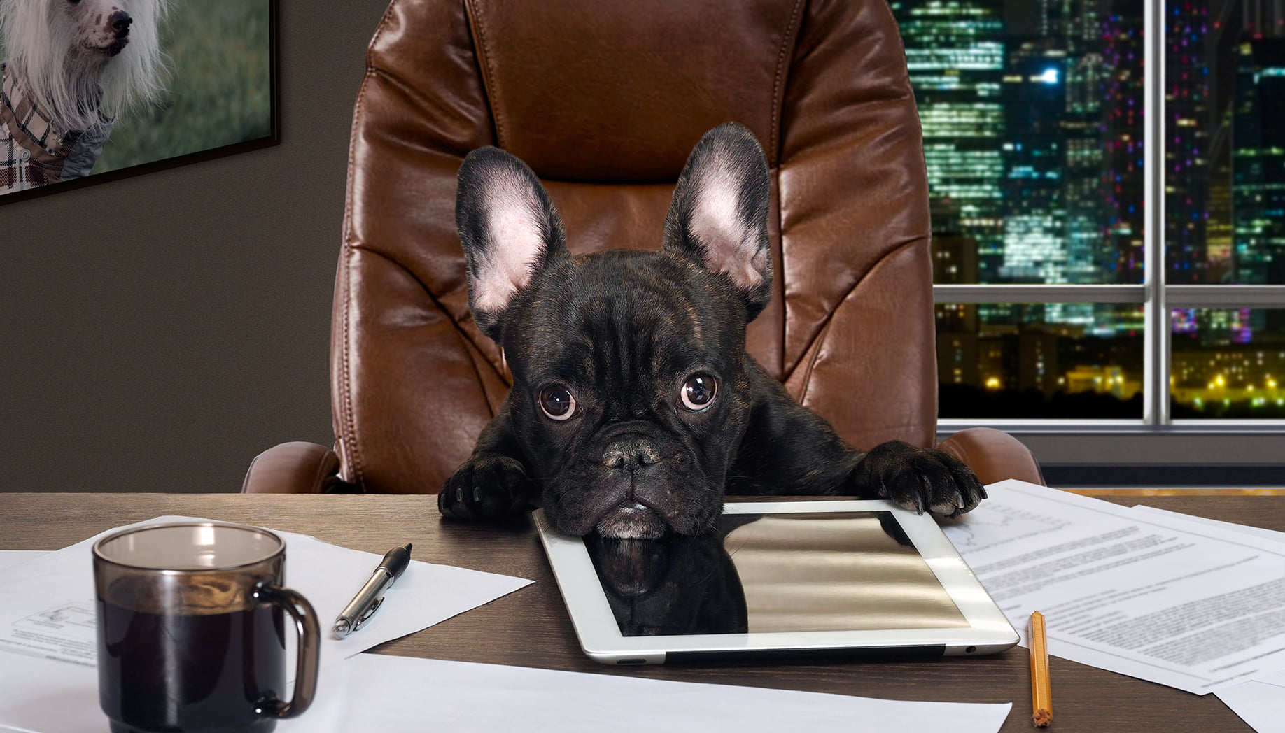10 Tricks to Being the Top Dog at Your Office